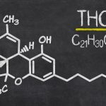 How Does THC Work and What does it do to Your Body